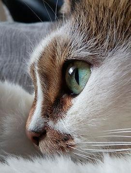 cat's eye for detail