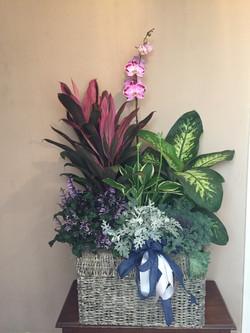 Mixed Plant Basket $150