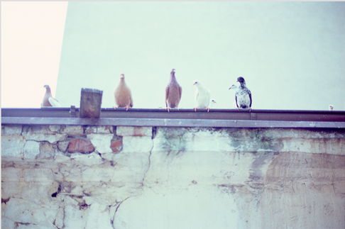 DOVES ON A WALL 1