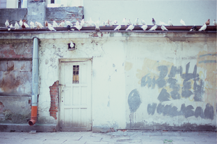 DOVES ON A WALL 2