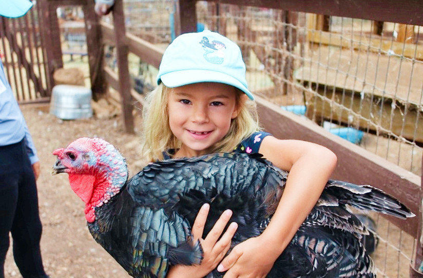 San Diego Kids Secret Zoos Wild Animals Hidden Gem Sugar Sweet Farm Encinitas Turkey Farm Animals