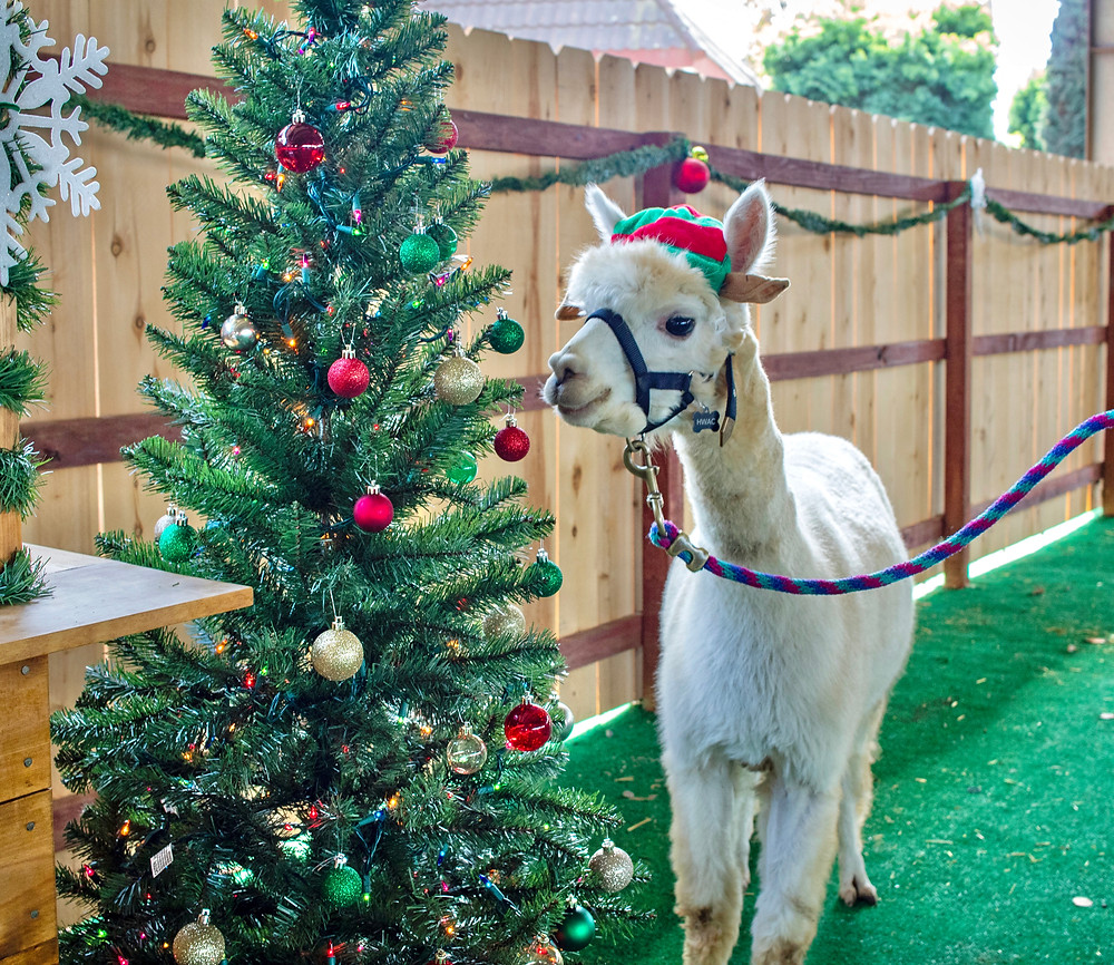Helen Woodward Animal Center Wild Winter Best Top Holiday Christmas events activities list guide for families kids are still happening in San Diego December 2020 what to do this year