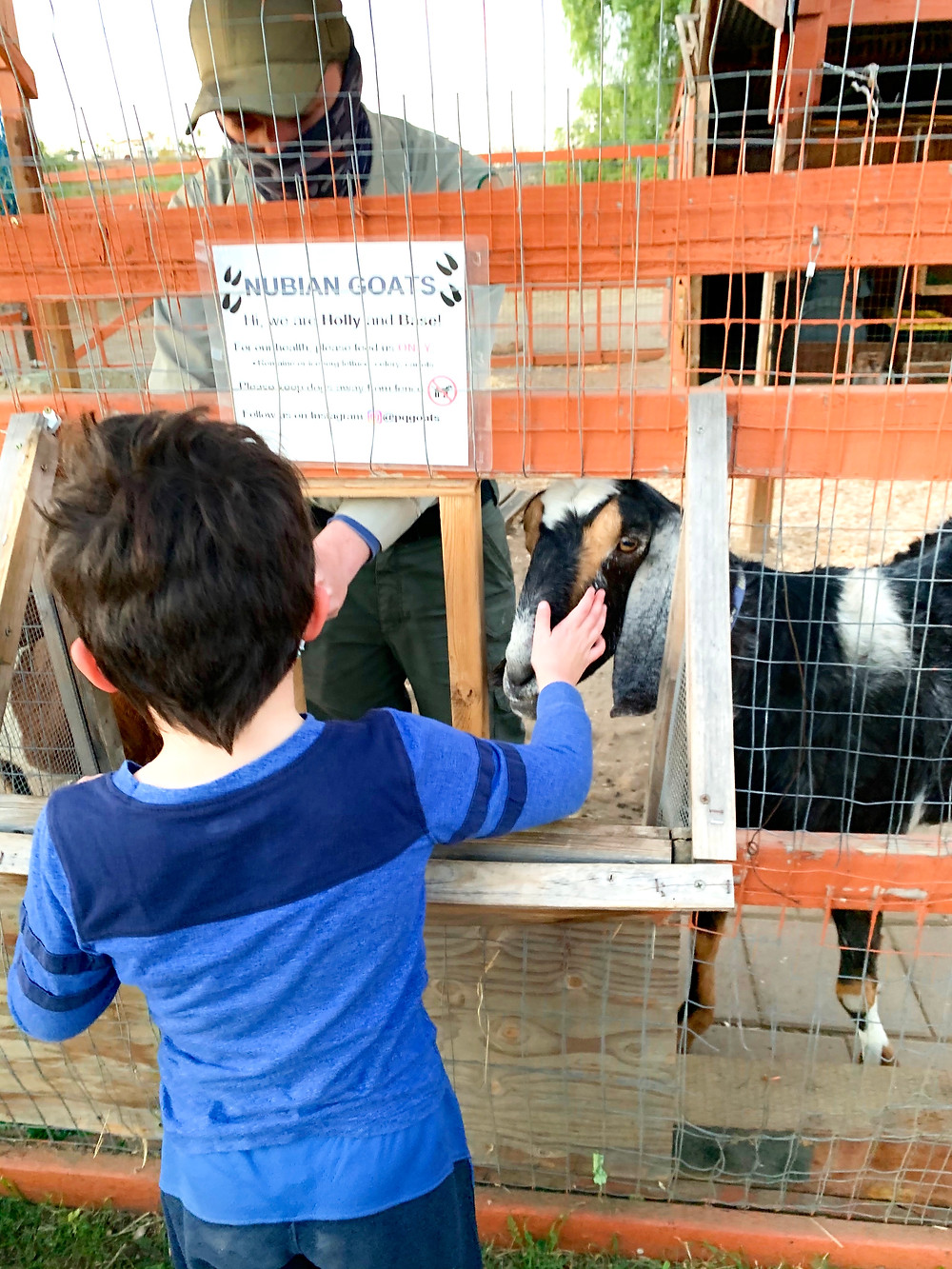 Penasquitos Adobe Ranch House Animals Goats Playground Hiking Trails San Diego Kids Free Secret Zoos Wild Animals Hidden Gem