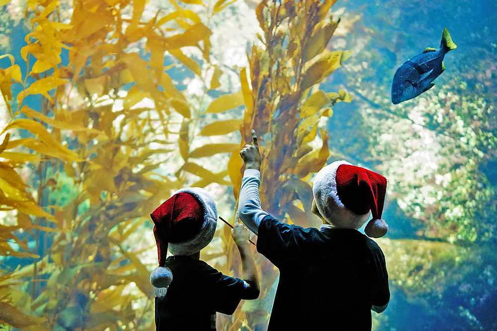 Birch Aquarium Seas N Greetings La Jolla Best Top Holiday Christmas events activities list guide for families kids are still happening in San Diego December 2020 what to do this year