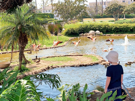 Shhh...Secret Zoos in San Diego (some are FREE!)