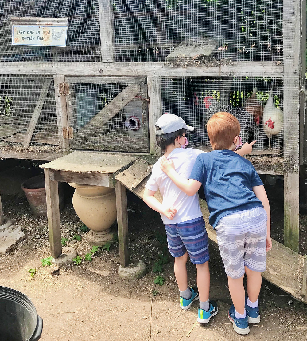 Mission Hills Nursery Chickens San Diego Kids Free Secret Zoos Wild Animals Hidden Gem