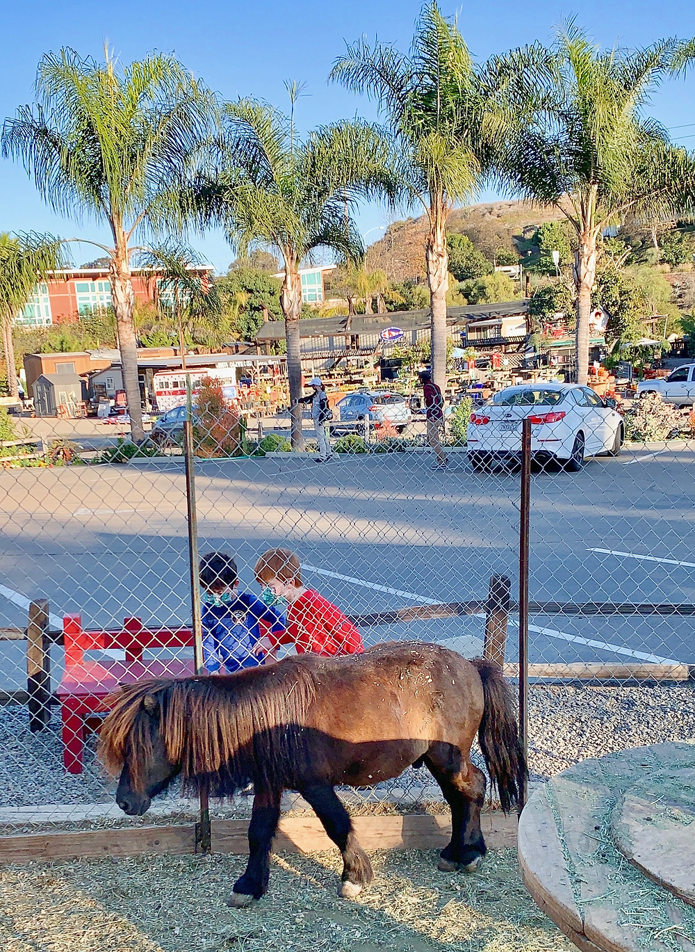 Sunshine Gardens Encinitas Farm Animals Horse Goats Pigs Chickens Koi Fish Plants Succulents San Diego Kids Free Secret Zoos Wild Animals Hidden Gem