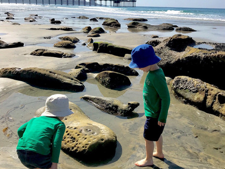 Tide Pooling Adventures in La Jolla