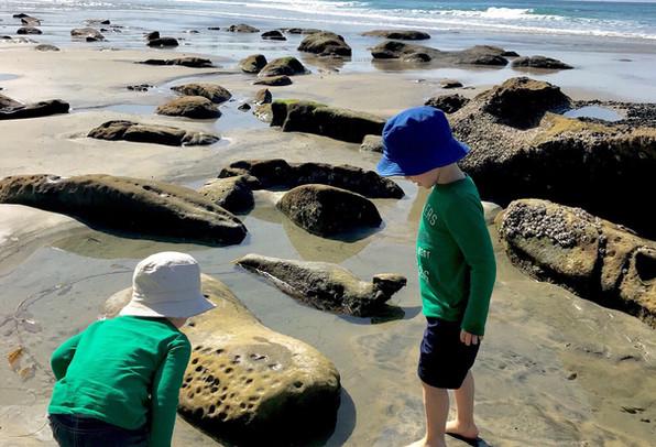Tide Pooling Adventures in La Jolla