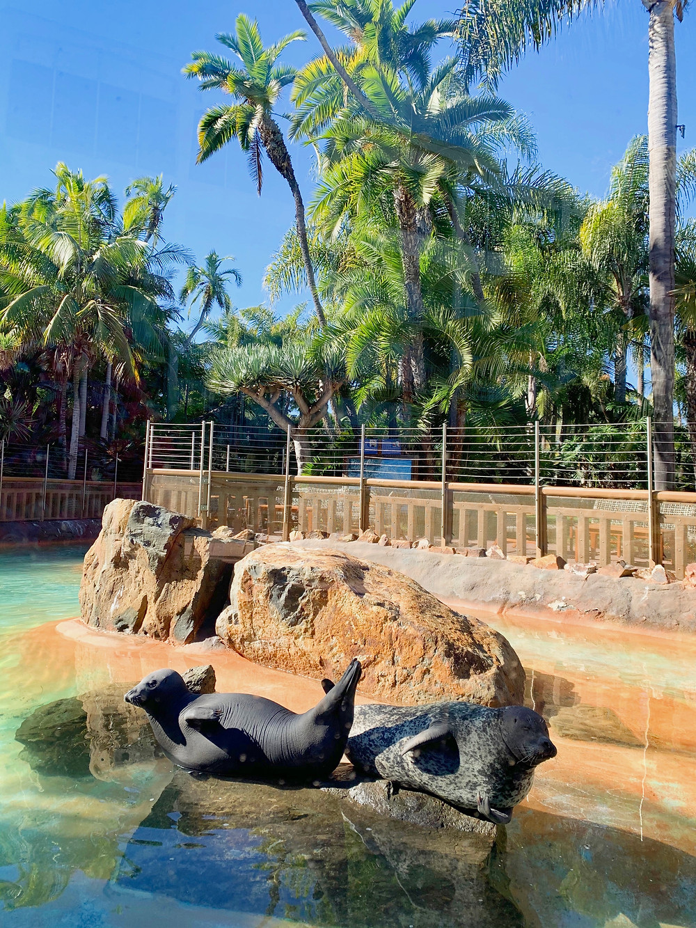 Bahia Resort Hotel Mission Bay Two 2 Rescued Harbor Seals San Diego Kids Free Secret Zoos Wild Animals Hidden Gem