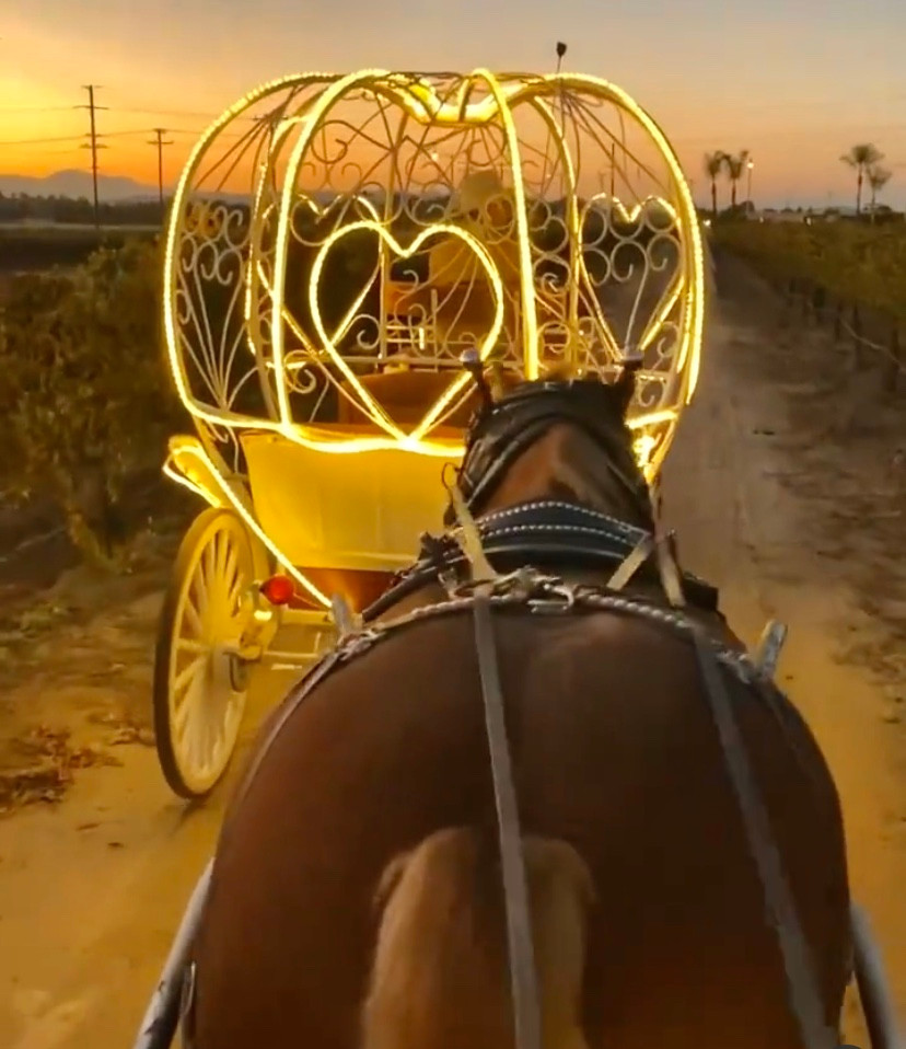 Temecula Carriage Company Horse Drawn Sleigh Rides Best Top Holiday Christmas events activities list guide for families kids are still happening in San Diego December 2020 what to do this year