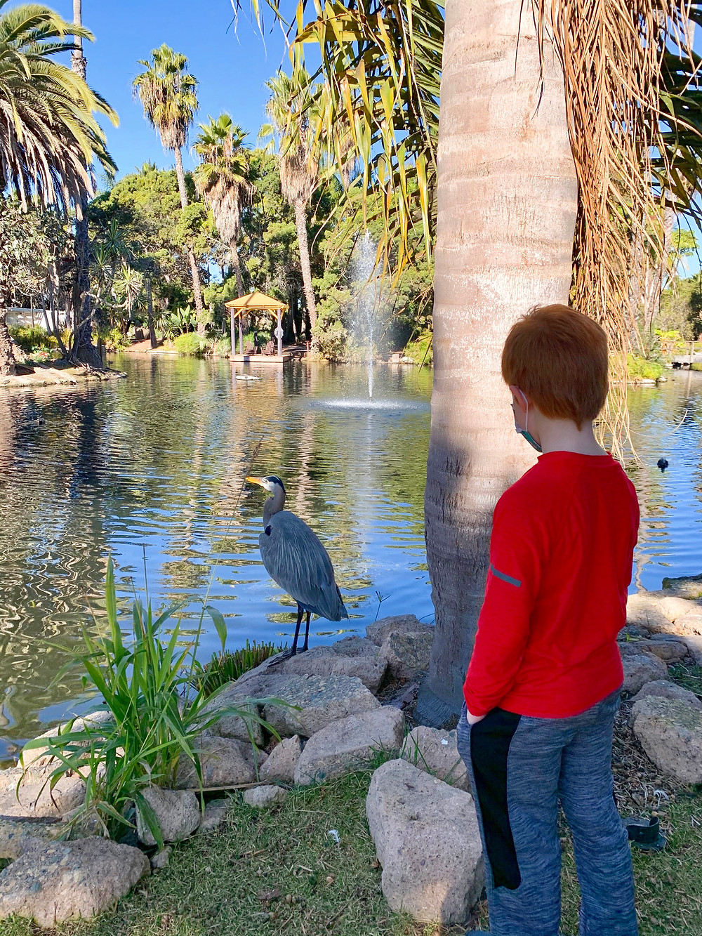 Paradise Point Resort & Spa Hotel Mission Bay Birds Lagoons Blue Heron San Diego Kids Free Secret Zoos Wild Animals Hidden Gem