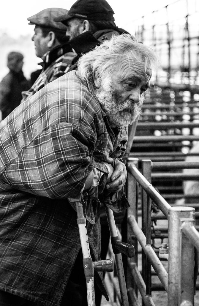 Hereford Livestock Market Photos