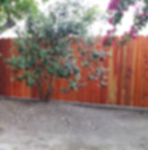 Here is a redwood picket fence supported by a concrete footing