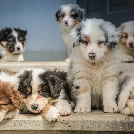 Influence of Environment on Puppy Behavior