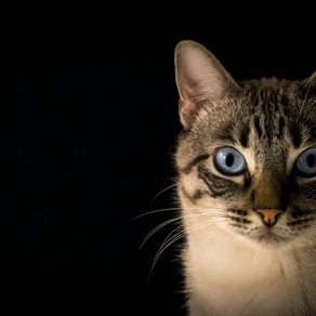 Effects of Neutering in Cats