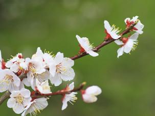 心を癒すお花の話