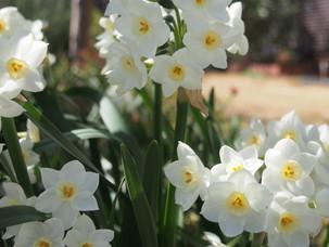 心を癒すお花について