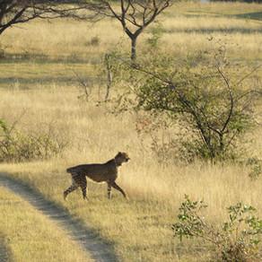 Elämää suurempi seikkailu Etelä-Afrikassa