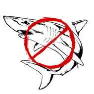 Shark Fin 1