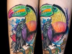 Toucan and Rainbow Lorikeet