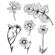 Fineline Flowers