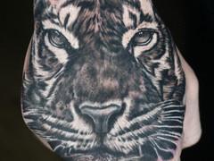Tiger on Fist