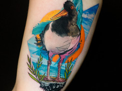 Olive the Oystercatcher