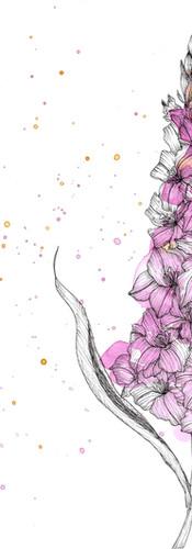 gladiolus_splash.jpg
