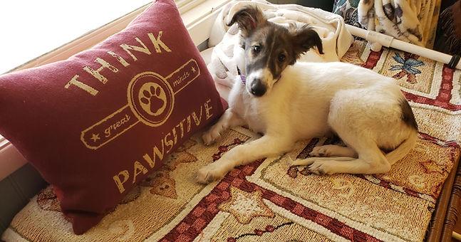 think pawsitive.jpg