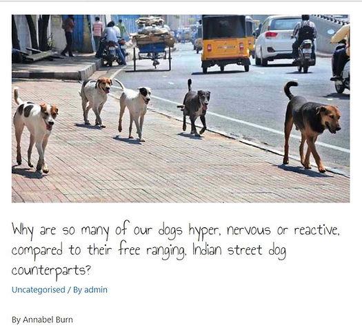 street dogs.jpg