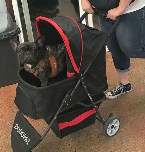 dog in stroller cropped.jpg