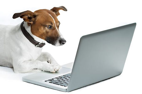 dog-at-laptop-computer.jpg