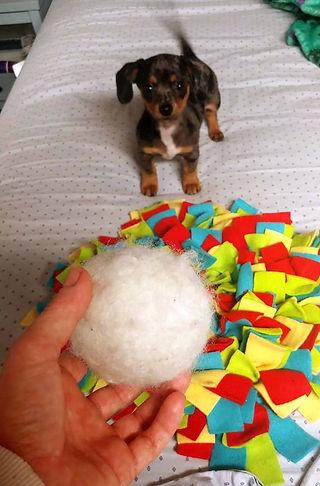 puppy dryer ball.jpg