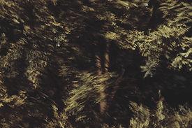 sthef folgar, photography, nature, trees, uruguay, madrid, spain