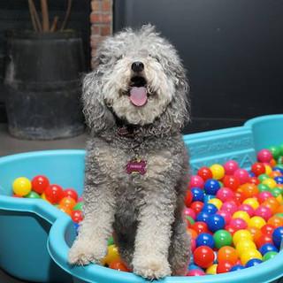 Puppy Shower2.jpg