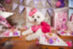 Princess birthday party for your pup