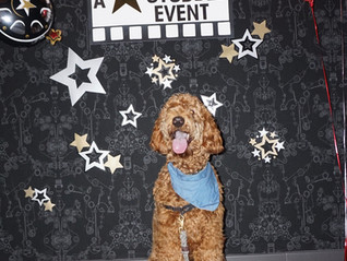 Prince's Star Studded Barkday!