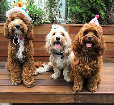 Minnie's first birthday with her friends