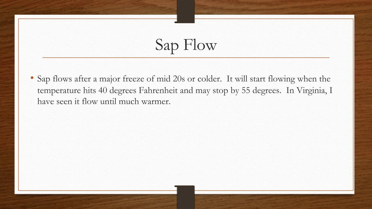 Sap Flow