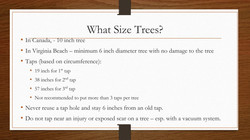 What Size Trees