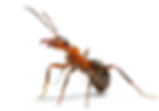 ant34.png