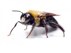 carpenter bee treatment.jpg