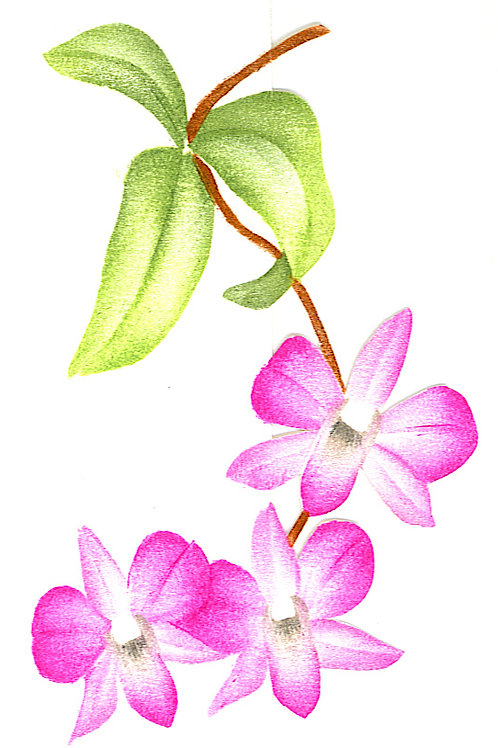 Larat orchidee