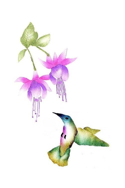 Combinatiepakket kolibrie en de grote fuchsia