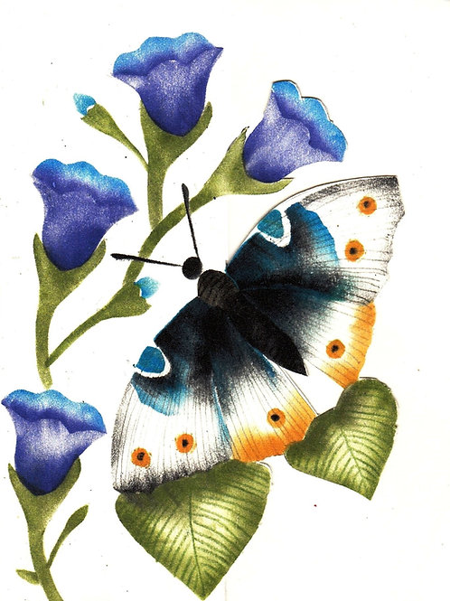 Combinatiepakket van de blauwe vlinder en klokjesbloem