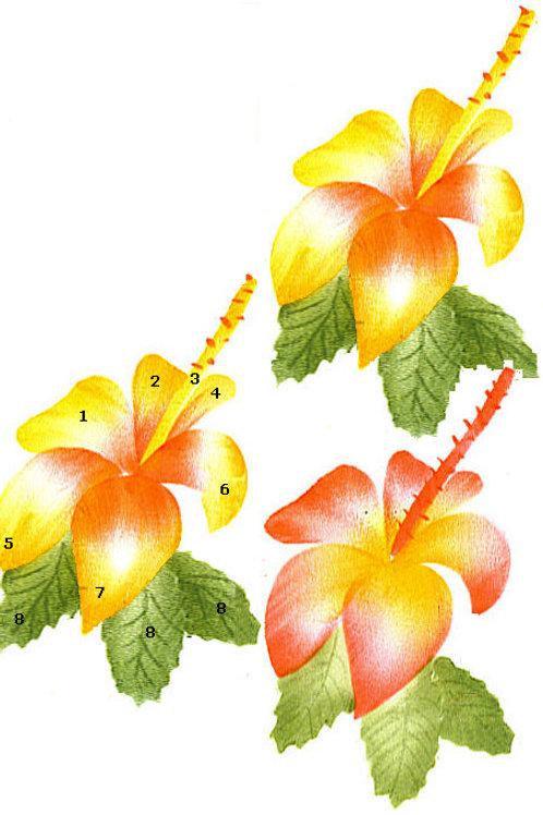 2 hibiscus colors