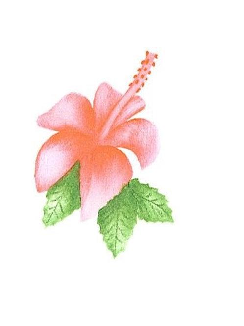 Kleine hibiscus