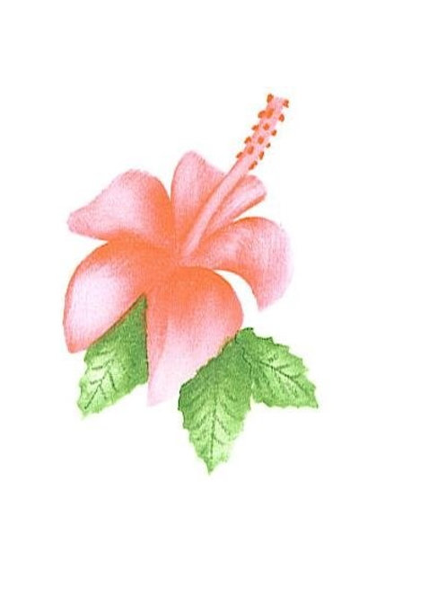 Small hibiscus