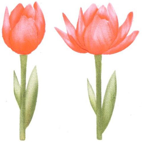 Kleine tulp